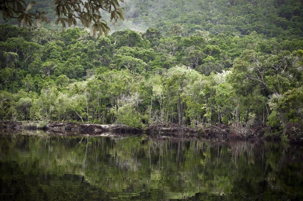 ayahuaska dżungla