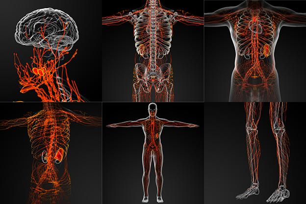 układ limfatyczny człowieka