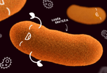bakterie flora jelitowa mikrobiom psychobiotyki depresja